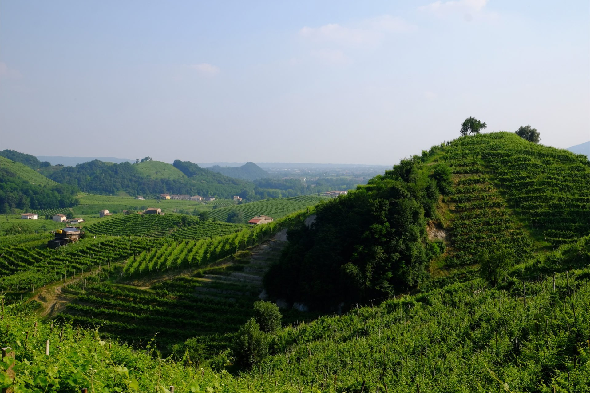 Image of italian hills where prosecco grapes are grown